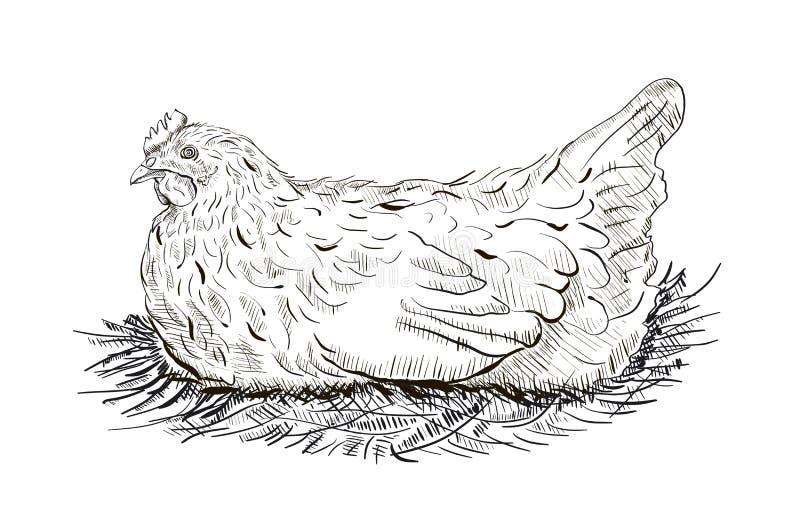 Pollo en la jerarquía ilustración del vector