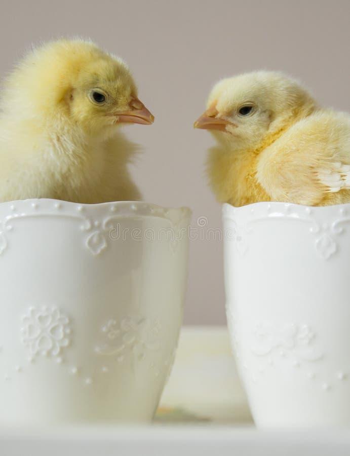 Pollo en una taza fotos de archivo libres de regalías