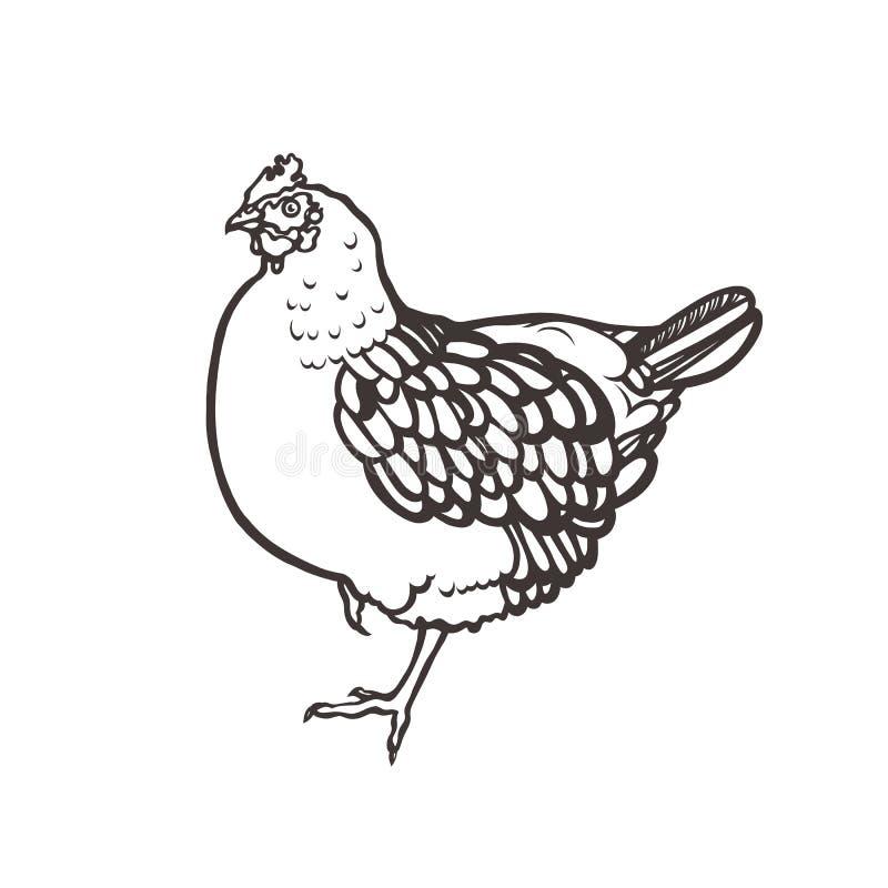 Pollo poultry Pájaro pintado con tinta Etiqueta para los productos del pollo farming Aumento del ganado Mano drenada libre illustration