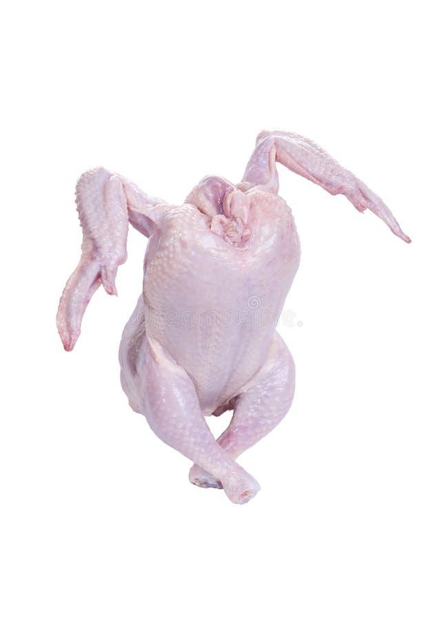 Pollo sin procesar de baile foto de archivo