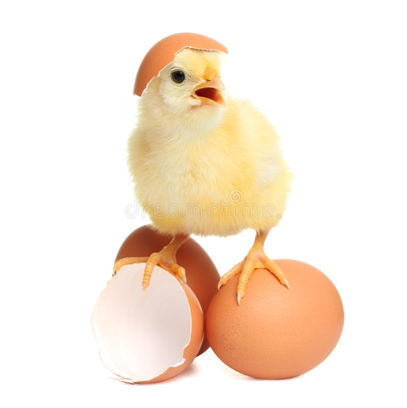 Pollo sveglio con le uova fotografia stock libera da diritti