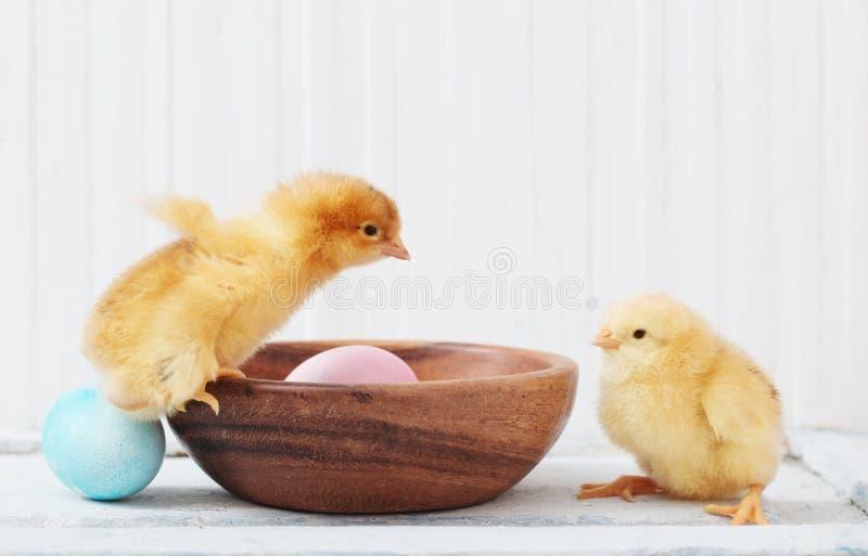 Pollo y huevo de Pascua en el fondo blanco fotografía de archivo libre de regalías