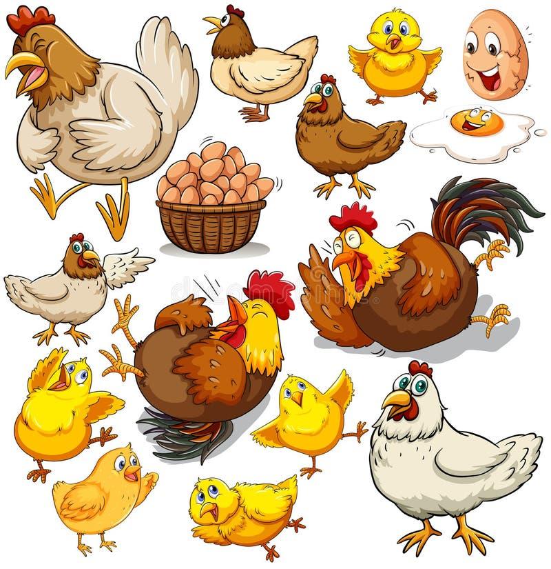 Pollo y huevos frescos ilustración del vector