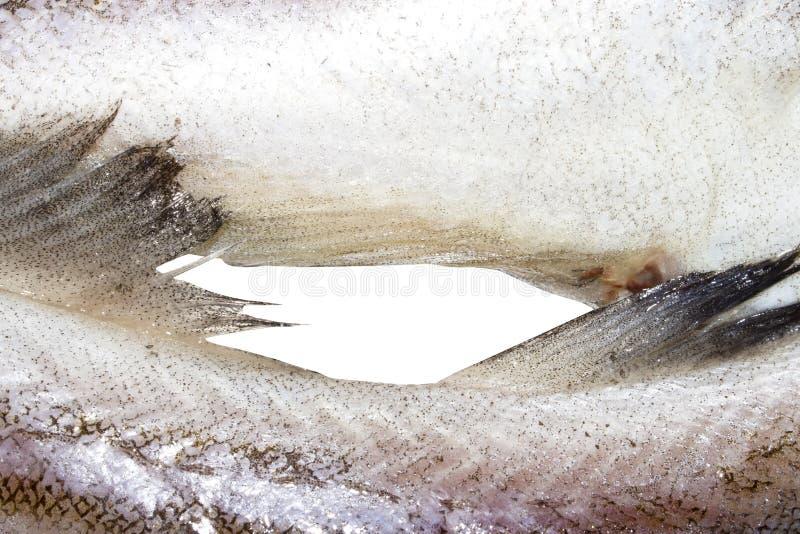 Pollockfische roh stockfotografie