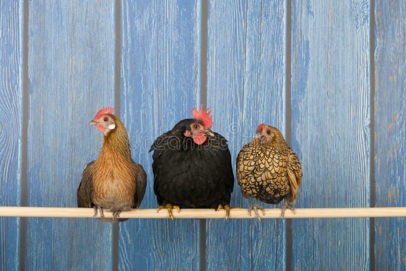 Pollos en gallinero fotos de archivo