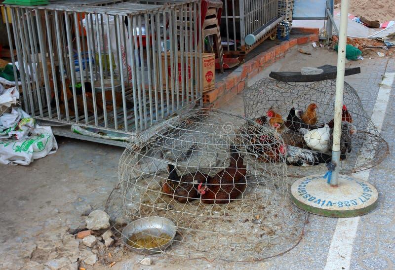 Pollos vivos en venta en Vietnam imágenes de archivo libres de regalías