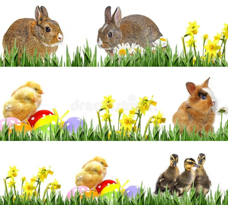 Pollos y huevos de Pascua recién nacidos, pequeños conejos y huevos de Pascua imagen de archivo libre de regalías