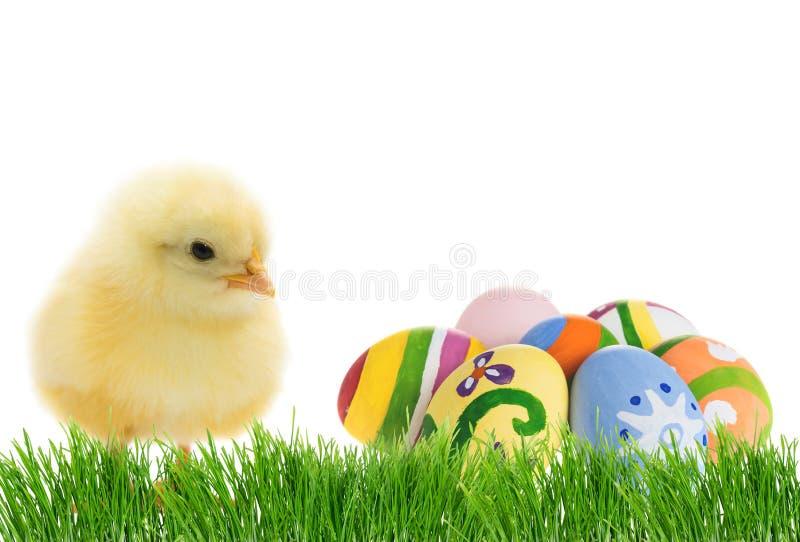 Polluelo lindo de Pascua con los huevos fotos de archivo