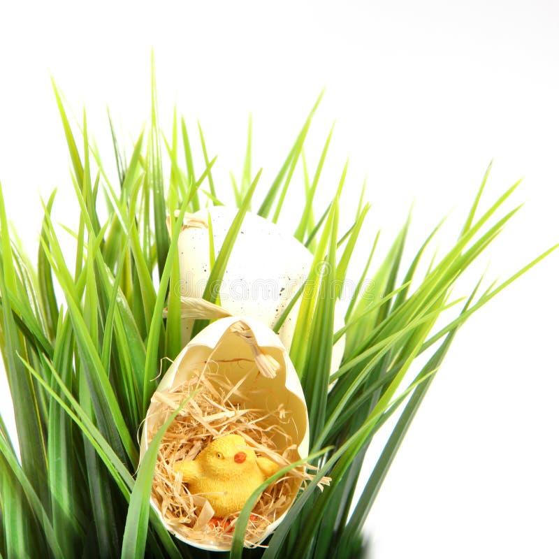 Polluelo lindo de Pascua en una cáscara de huevo agrietada imágenes de archivo libres de regalías