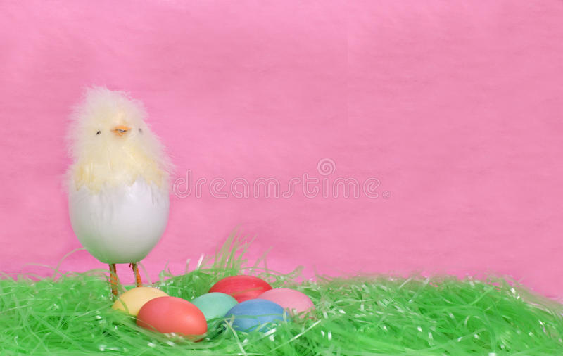 Polluelo y huevos lindos de Pascua imagen de archivo