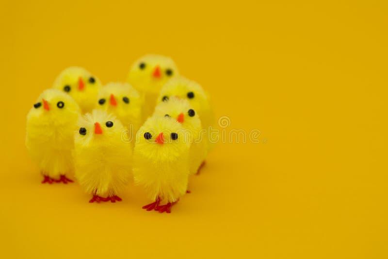 Polluelos de Pascua en la hierba aislada en blanco fotos de archivo libres de regalías