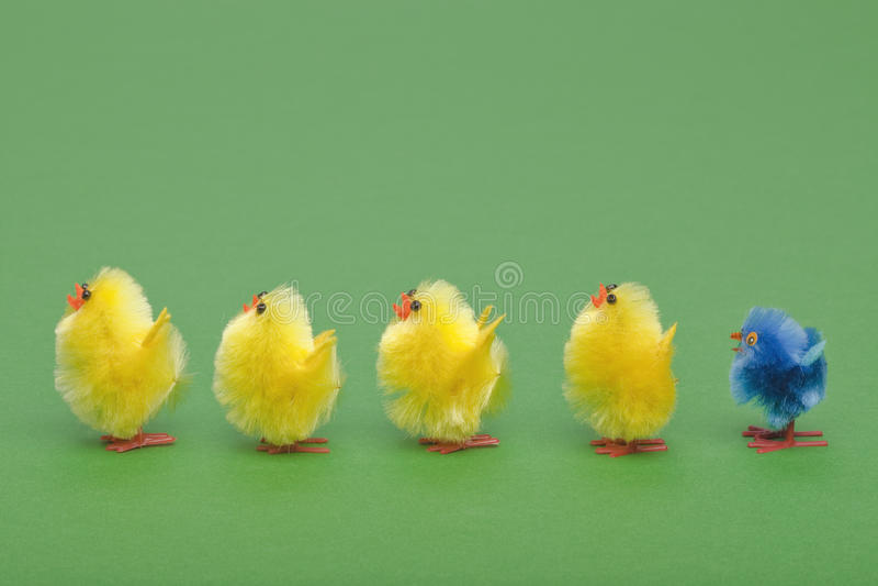 Polluelos de Pascua en una línea fotos de archivo libres de regalías