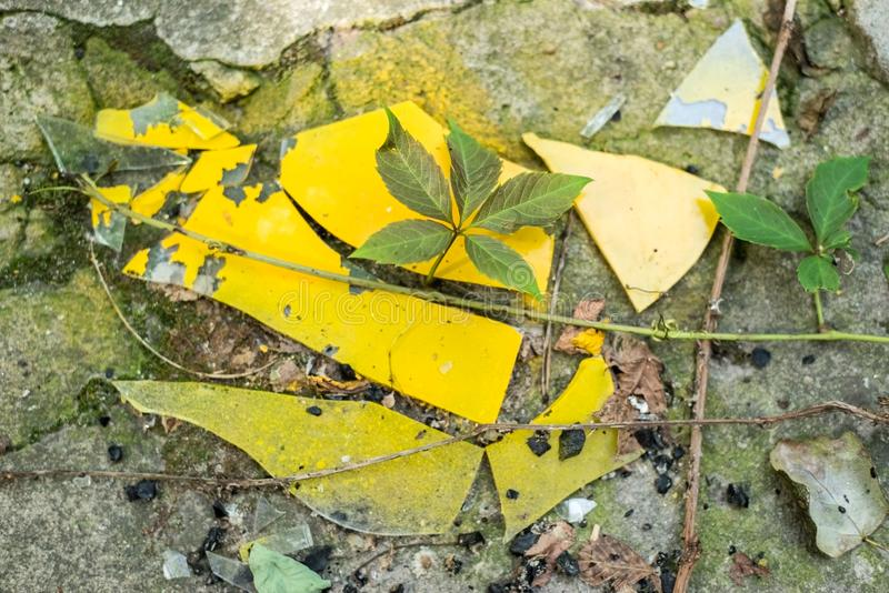 Broken glass of yellow color against a wild plant. The struggle for life. Glass pollution royalty free stock photography