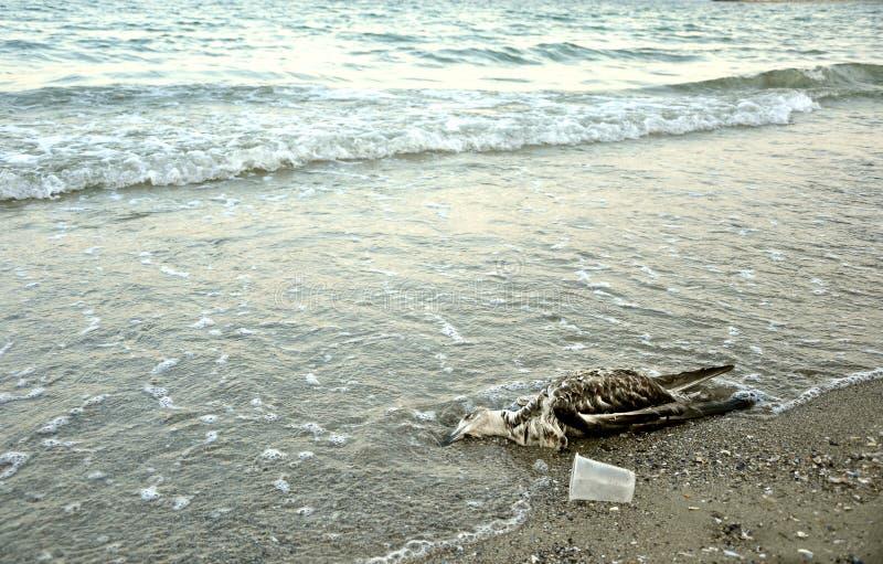 Polluted Black Sea Coast In Romania Royalty Free Stock Photo
