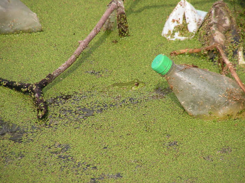 Download Polluted natural pond stock image. Image of bottle, container - 26864439