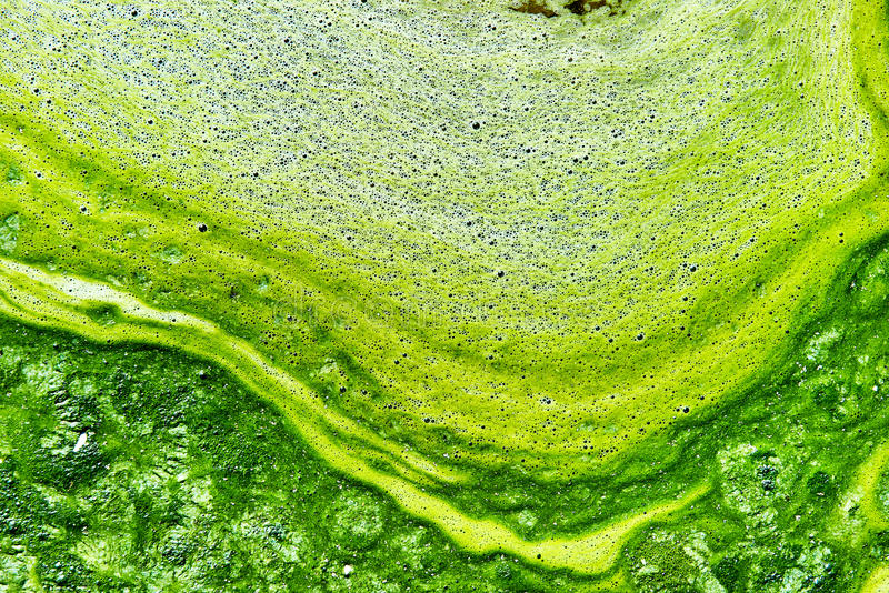 Polluted water with algae stock photos