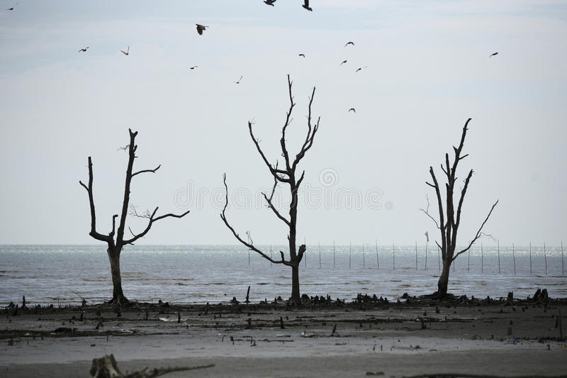 Pollution. Stock image of the enviromental damage royalty free stock photos