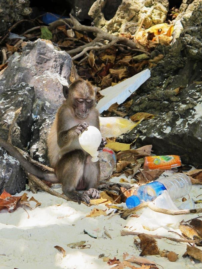 Pollution 1/2 de ballon de participation de singe image stock