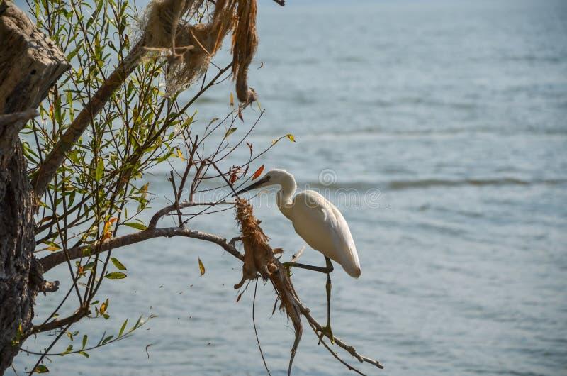 Pollution environnementale et héron blanc photographie stock libre de droits