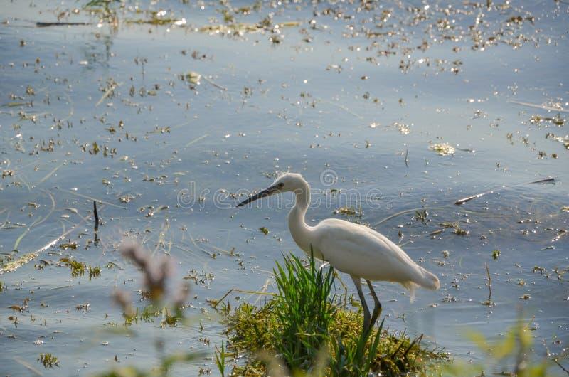 Pollution environnementale et héron blanc photos libres de droits