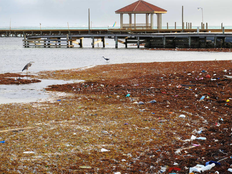 Pollution & Trash along the Shore stock photo