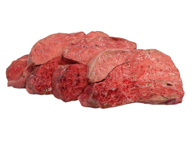 Polmone crudo affettato della mucca. immagini stock