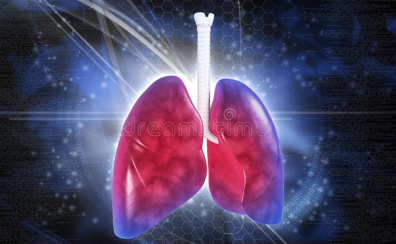 polmoni royalty illustrazione gratis