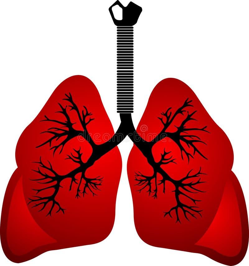 Polmoni rossi illustrazione di stock