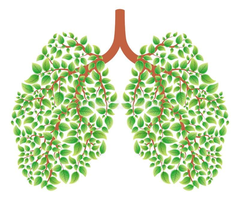 Polmoni sani illustrazione di stock