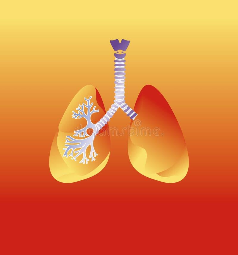 Polmoni umani royalty illustrazione gratis