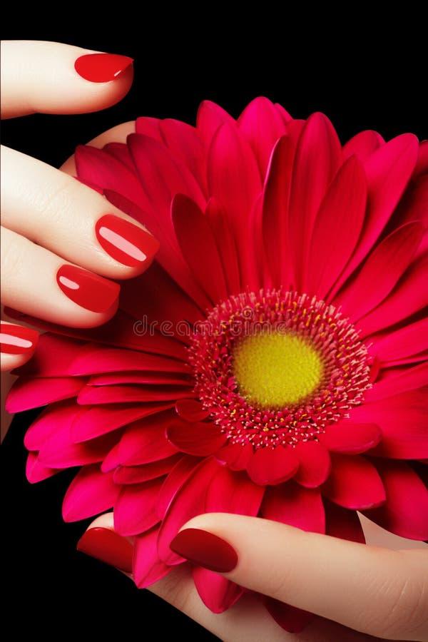 Polnisch der Nägel mit dem nailfile Empfindliche Hände mit der Maniküre, die rosa Blume hält lizenzfreies stockbild
