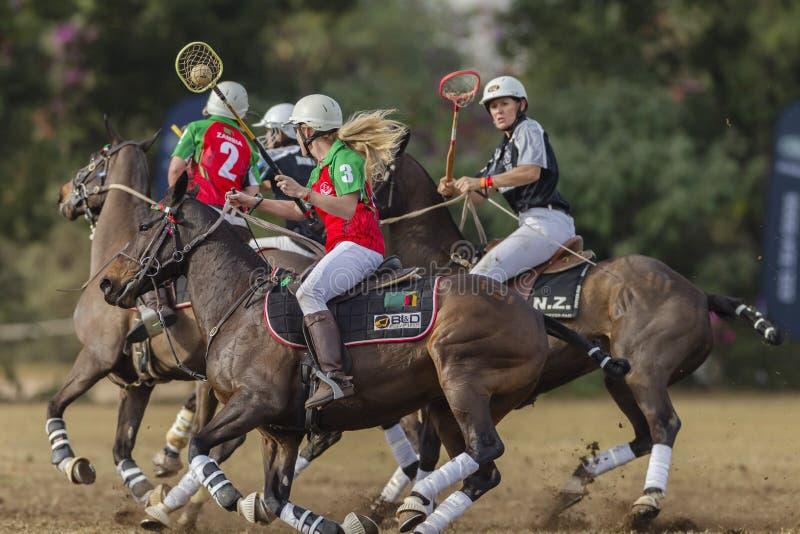 Polo-Cross Women Riders Action stock photo