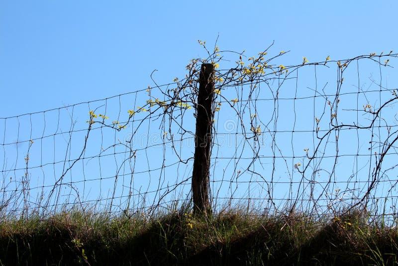 Polo de madeira velho que guarda a cerca de fio com a planta da esteira rolante sobre o monte pequeno cercado com grama sem corte fotografia de stock royalty free