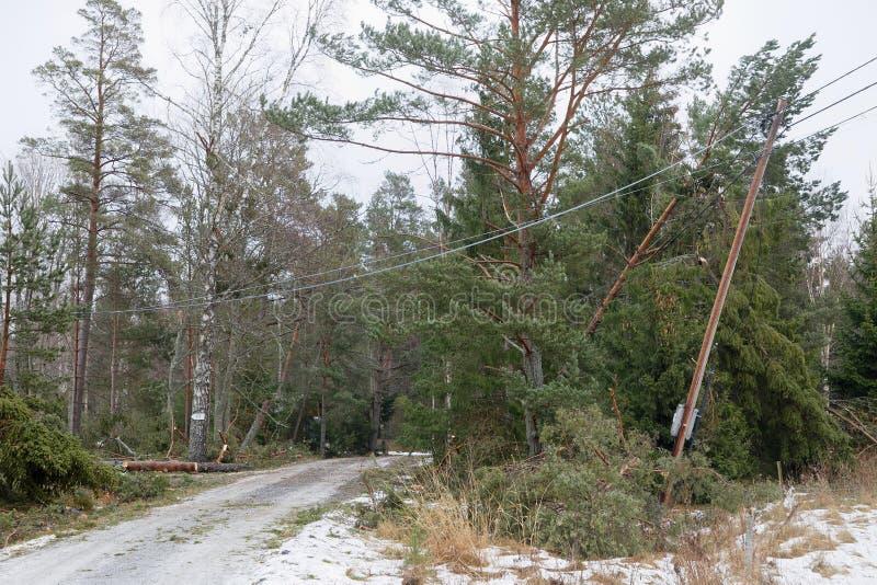 Polo elétrico danificado e pinheiros caídos após a tempestade terrível Alfrida na Suécia imagem de stock royalty free