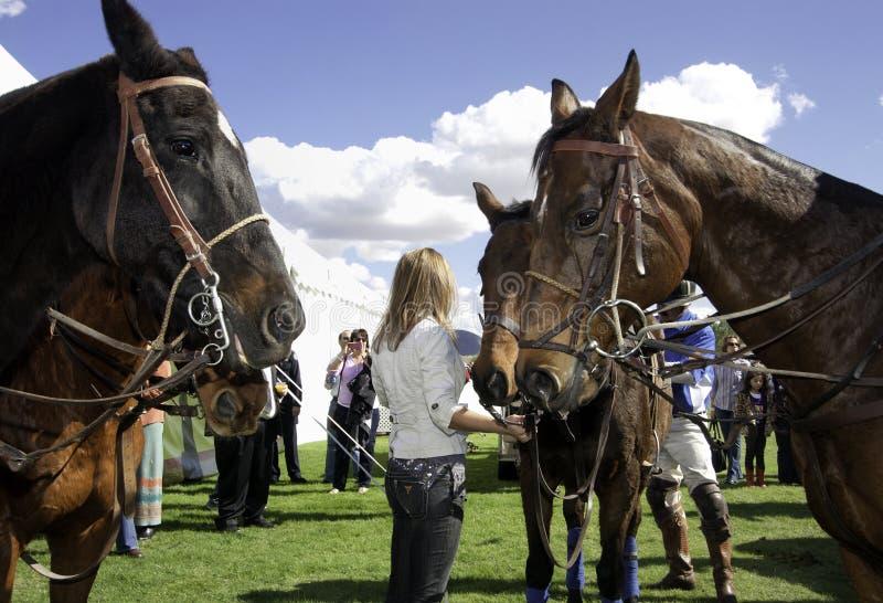 Polo Game Ponies Face Off royaltyfri fotografi