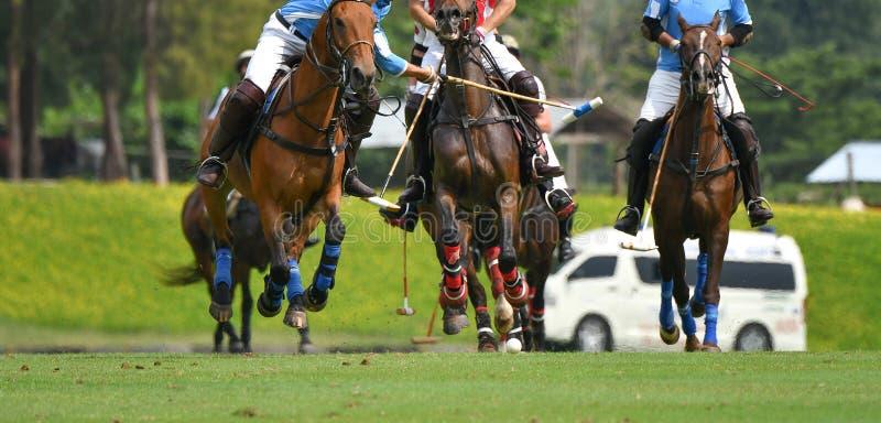 Polo gracze jadą na horseback chwytać polo piłkę w srogiej prędkości zdjęcie stock