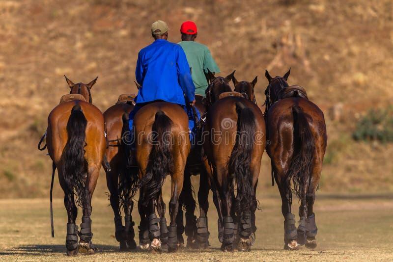 Polo Grooms Horses lizenzfreie stockbilder