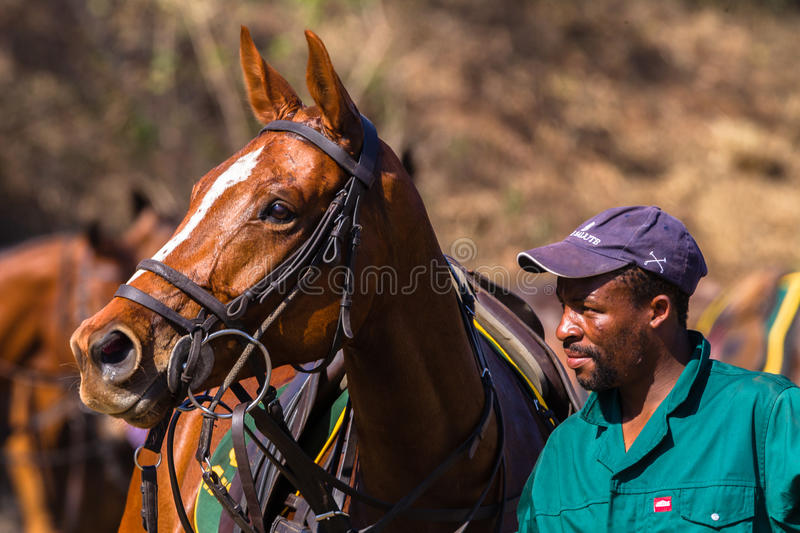 Polo Grounds Groom Horse Shongweni Hillcrest royaltyfri bild