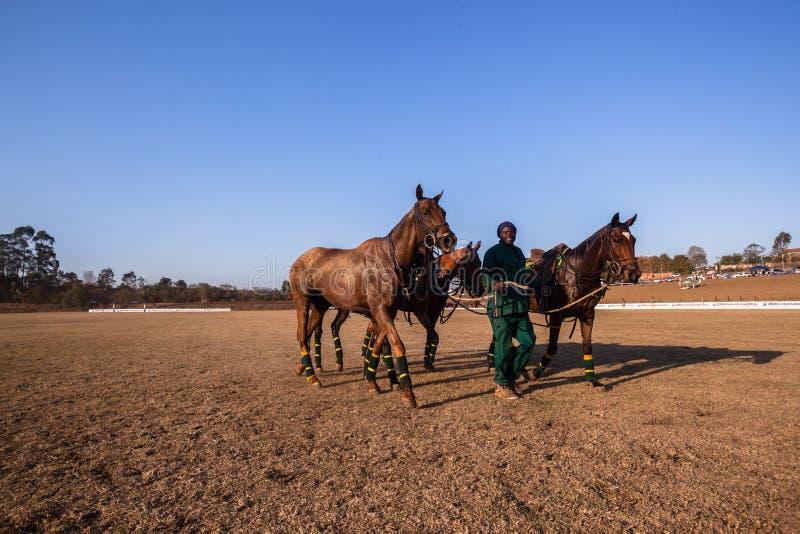 Polo Grounds Grooms Horses Shongweni Hillcrest stockbilder