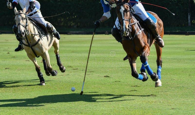 polo häst, sport, lek, spelare som spelar, ponnyer, match, klubba royaltyfri bild