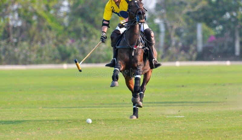Polo Horse Player Riding fotografering för bildbyråer