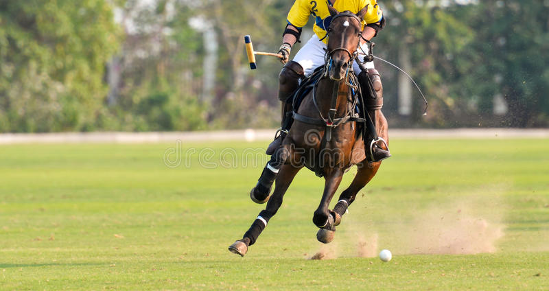 Polo Horse Player Riding arkivfoton