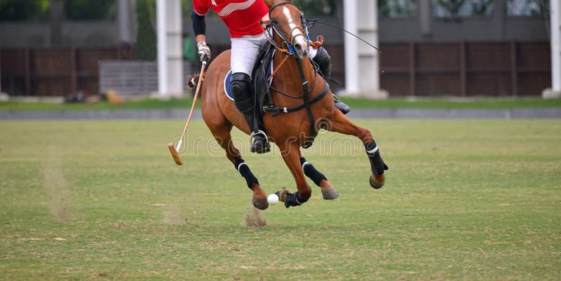 Side view picture of the Horse Polo player. royalty free stock photography
