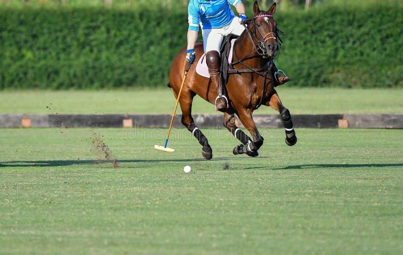 Polo Horse Player Riding To kontroll bollen arkivbild