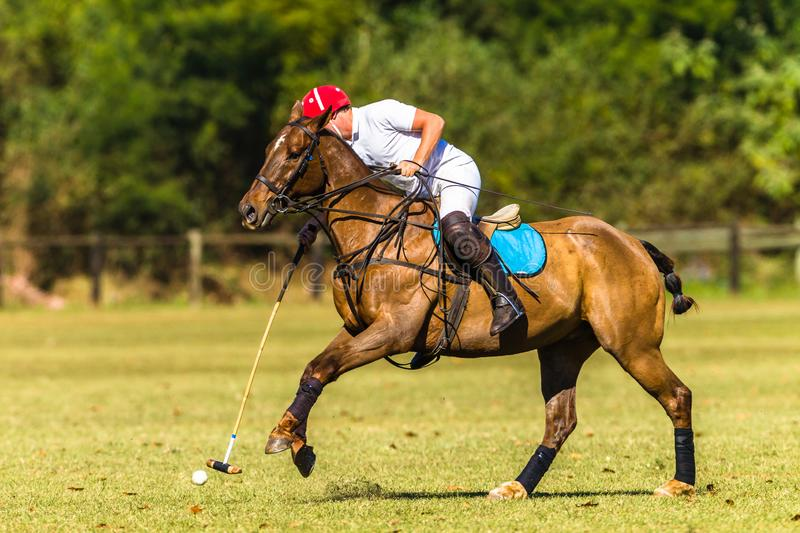 Horse Polo Player Field Game Action. Polo Horse Rider player closeup unidentified striking mallet to ball game action countryside equestrian sports field stock image