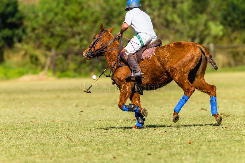 Horse Polo Player Field Game Action. Polo Horse Rider player closeup unidentified striking mallet to ball game action countryside equestrian sports field stock photos