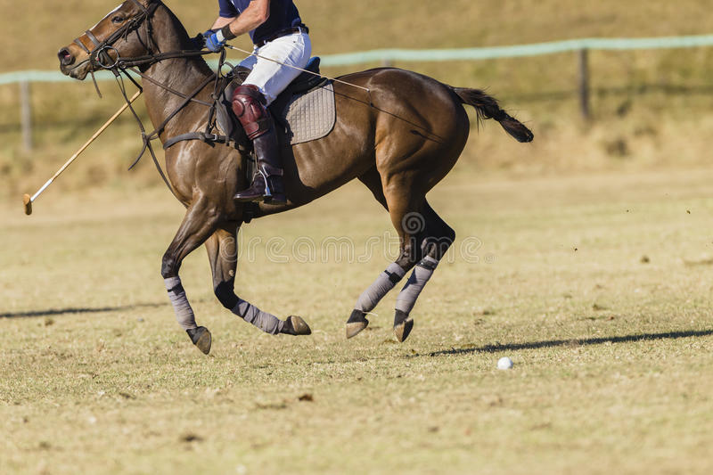 Polo Horse Rider. Polo equestrian rider horse pony game action royalty free stock images