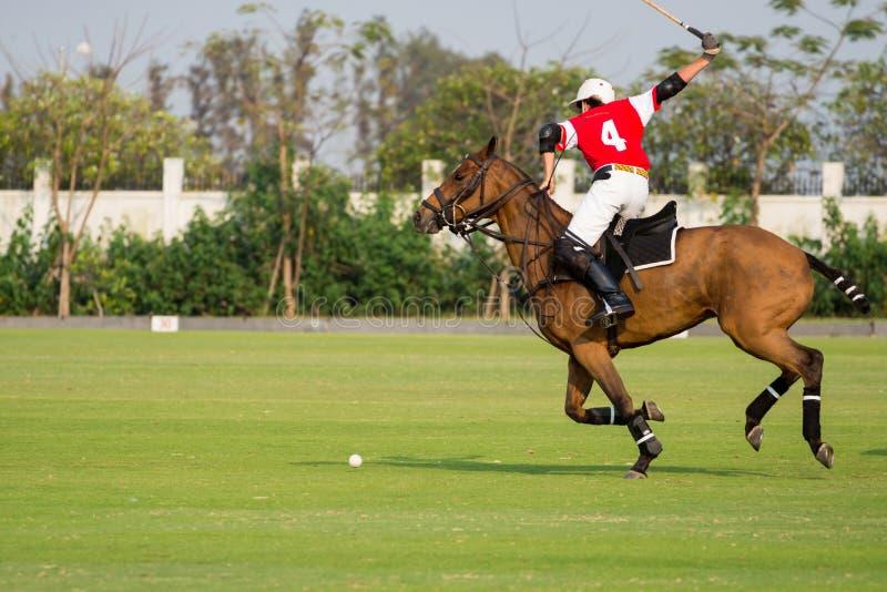 Polo Horse Sport Player die een Houten hamer gebruiken stock foto