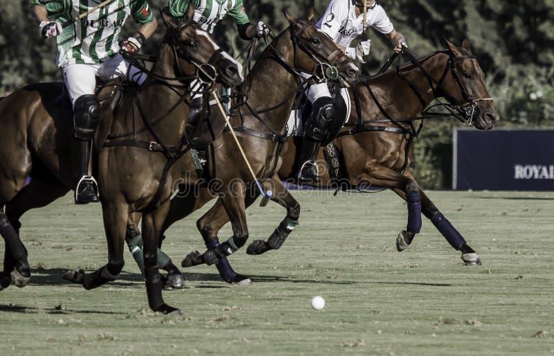 Polo Horses royalty-vrije stock afbeelding