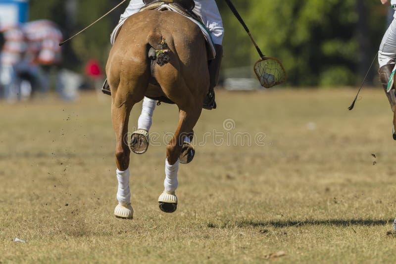 Polo-Kreuz-Pferdereiter lizenzfreie stockfotografie